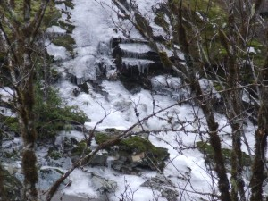 2nd Creek of ice feeding the Sooke River