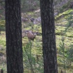 This 5 point buck was eyeing us
