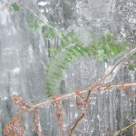 Ferns encased in ice the Iceage is back!!!