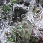 Ice formations over plants help to freeze them.