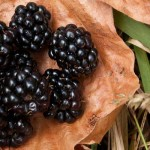The best of fall harvest